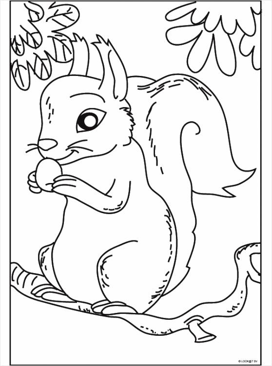 tekening aap in boom kleurplaten234