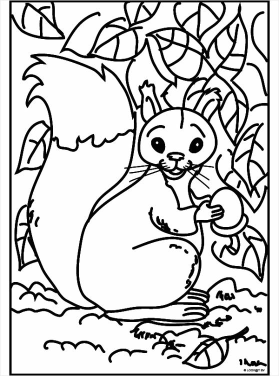 kleurplaat eekhoorntjes kleurplaten234