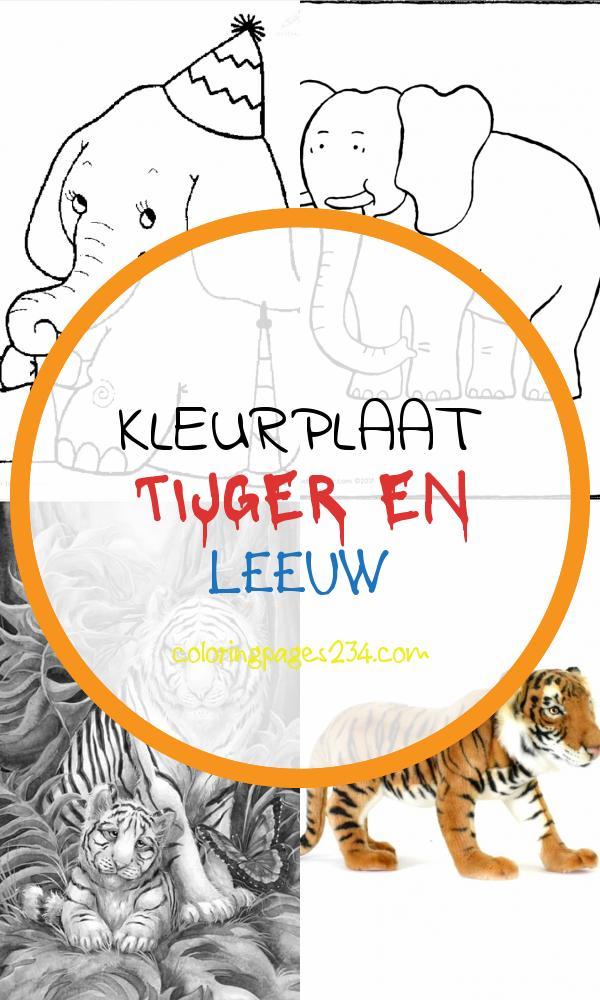 kleurplaat tijger en leeuw kleurplaten234 kleurplaten234