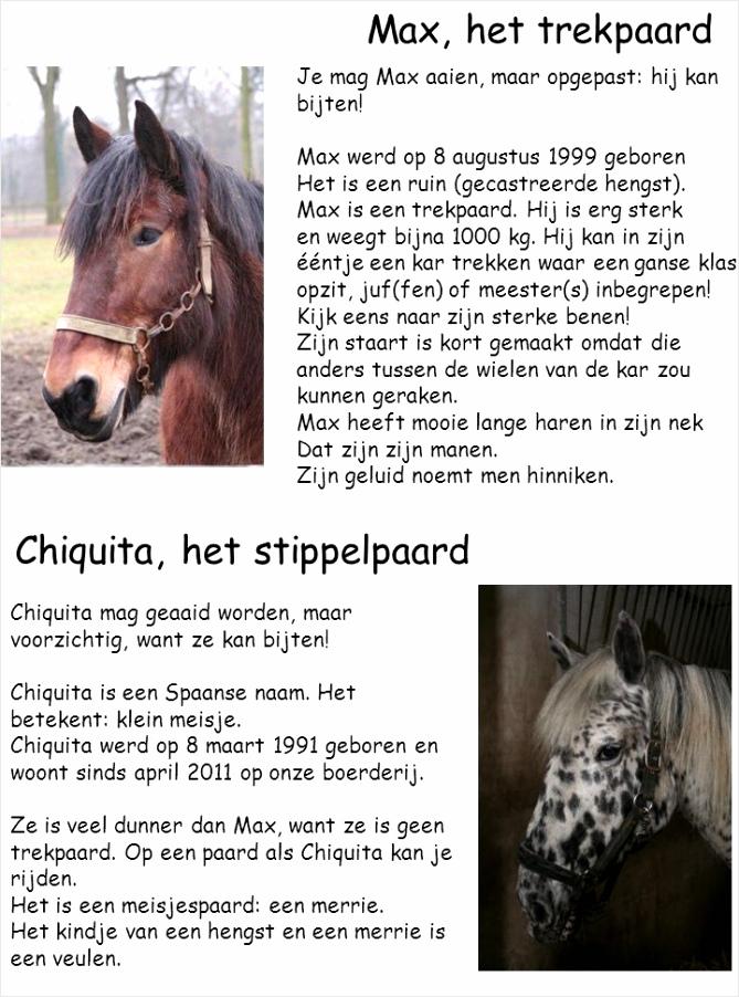 Chiquita het stippelpaard icuer
