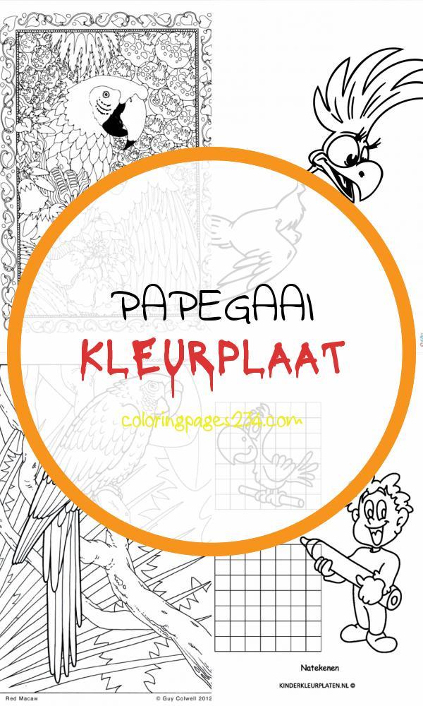 Ehbiyw 76671 A9t82dqsv5pzrfhwt Papegaai Kleurplaat Bird Coloring Pages for Kids 1222930