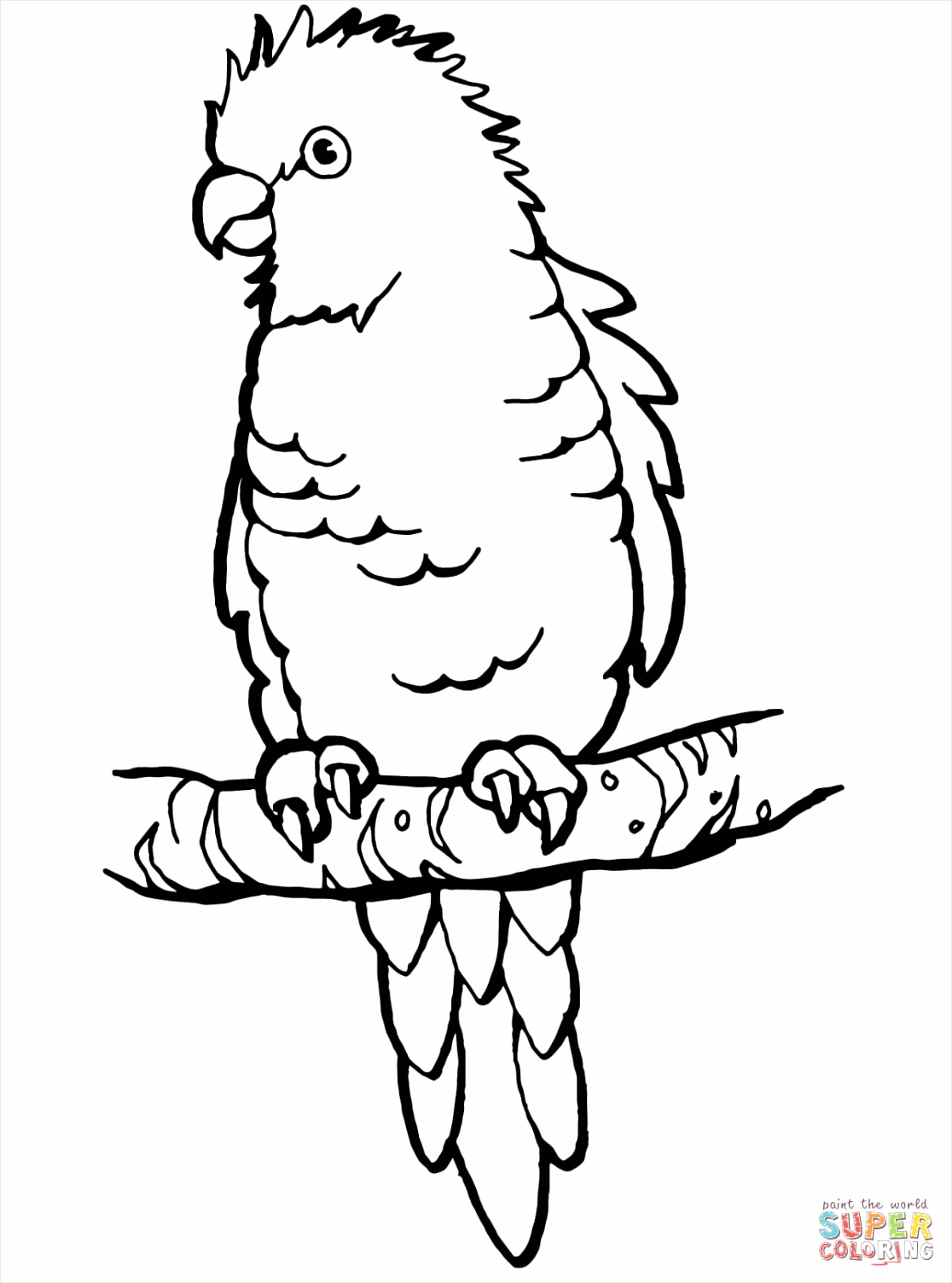 perched parrot coloring page wauti