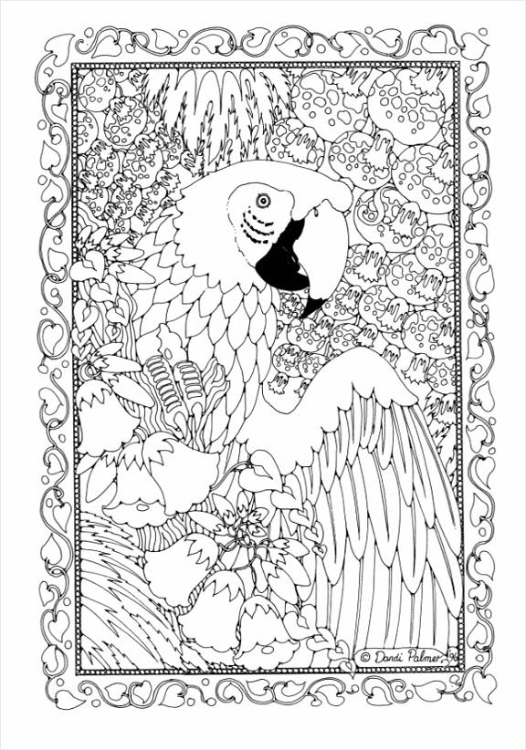 kleurplaat papegaai dl trpau