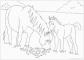 8 Malvorlagen Pferde Pdf