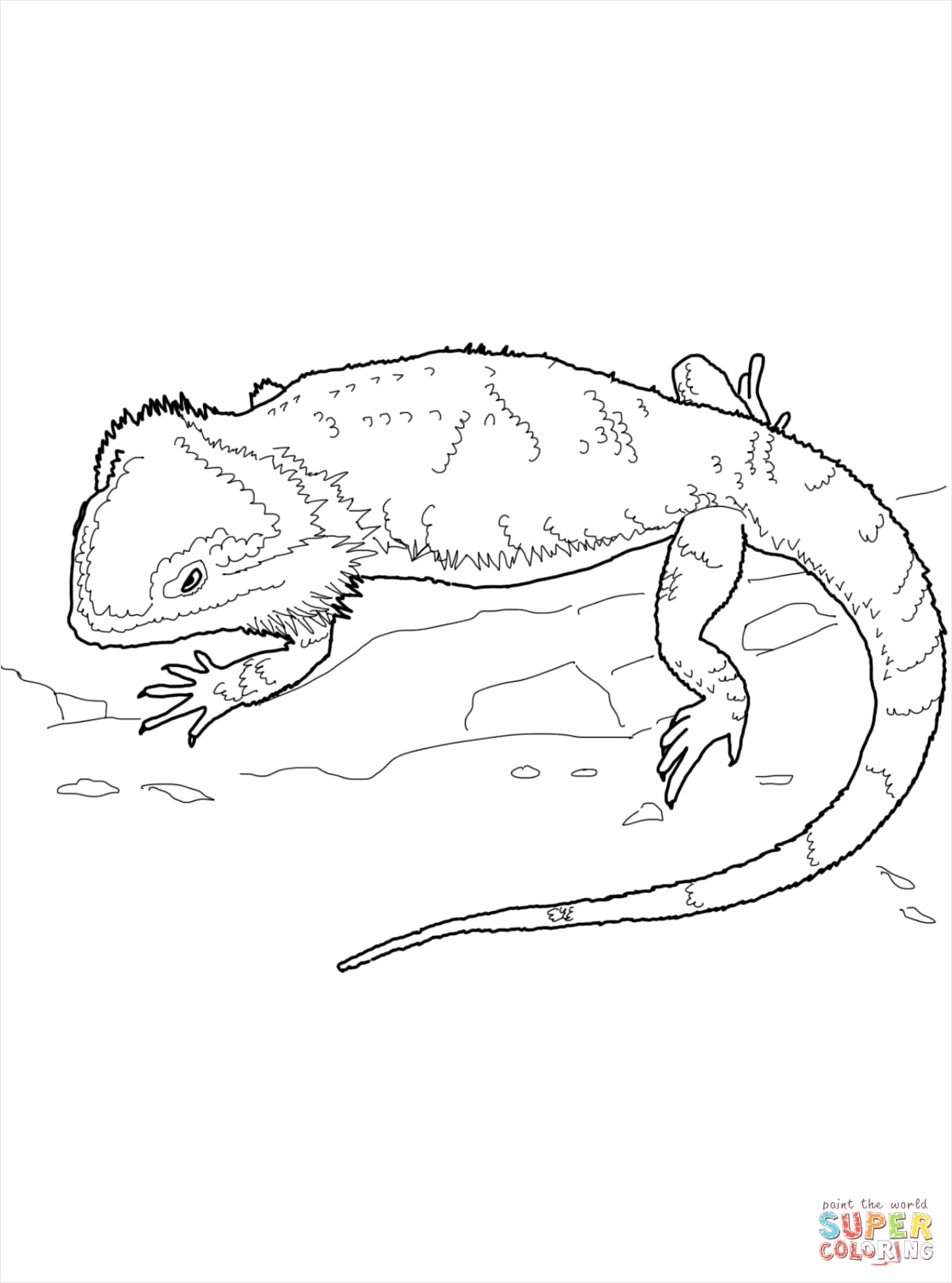 bearded dragon coloring page aotai