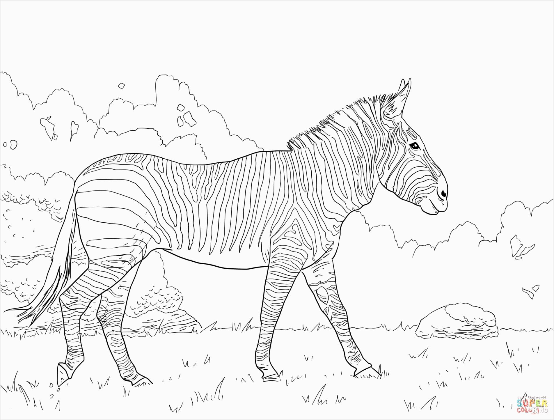 ausmalbilder zum ausdrucken pferde pferde zum ausdrucken schon ausmalbilder pferde gratis zum of ausmalbilder zum ausdrucken pferde iabuu