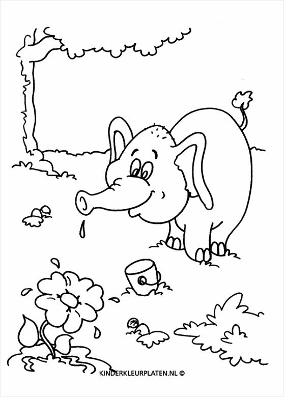 kleurplaten dieren olifant kleurplaten234 kleurplaten234