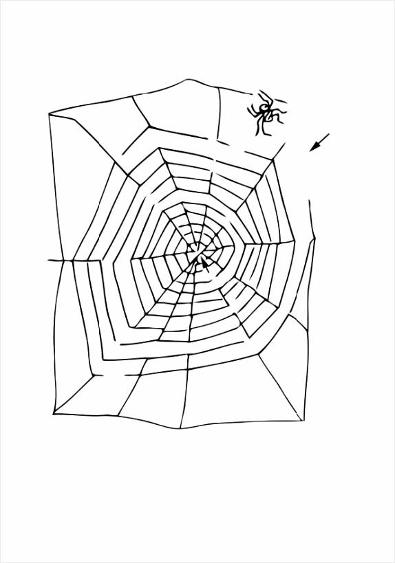 kleurplaat doolhof spin dl tyypo
