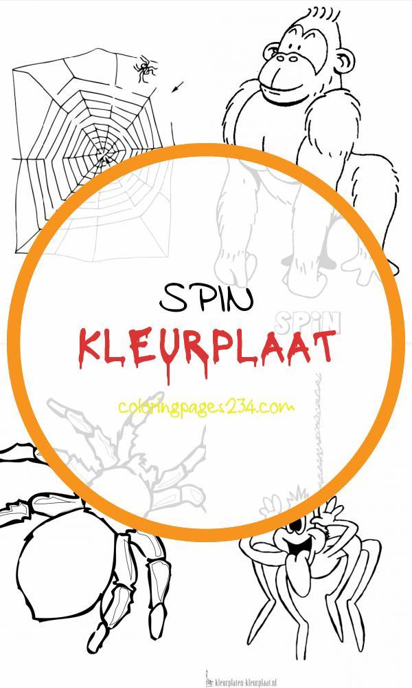 Kleurplaat spin spin kleurplaat, source:knutselopdrachten.nl