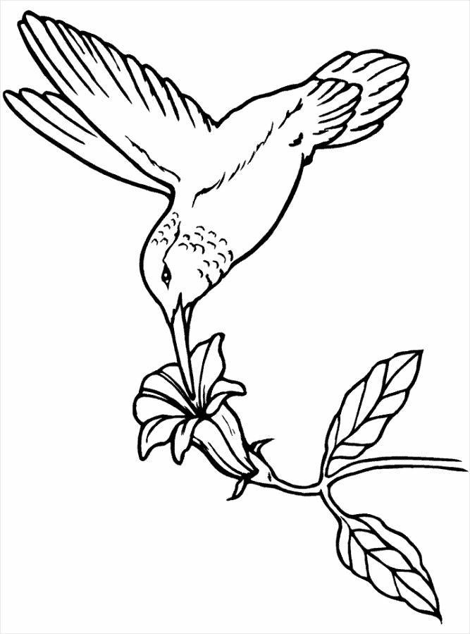 vogel5 tbeem