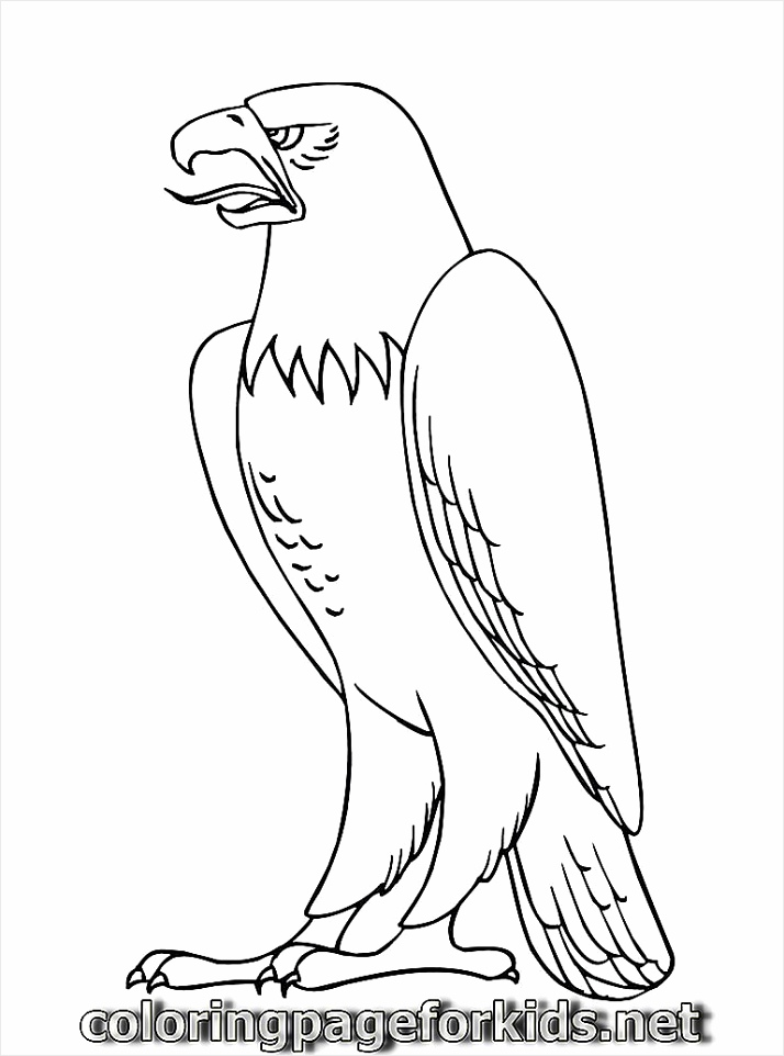 free printable eagle coloring pages ppeya