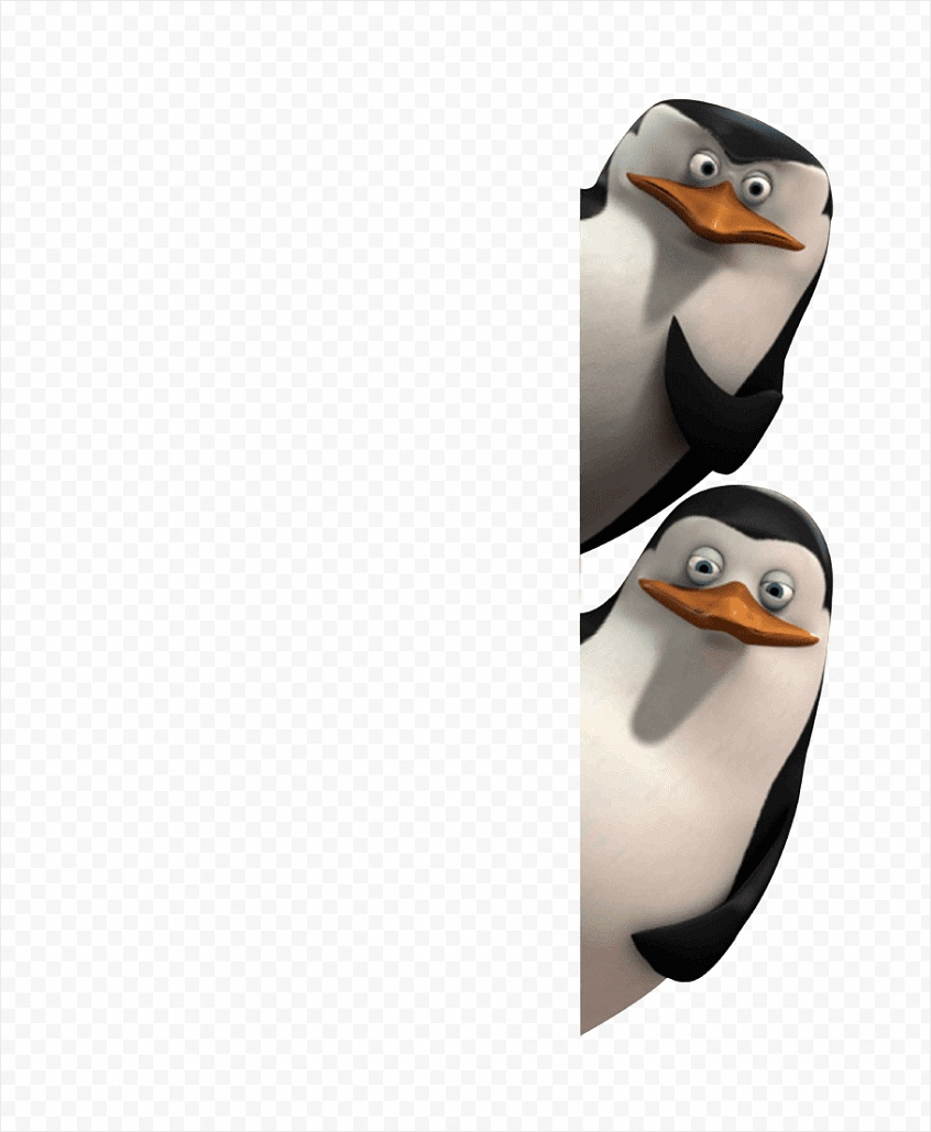 private penguin flightless bird madagascar pinguins png clip art iyiay