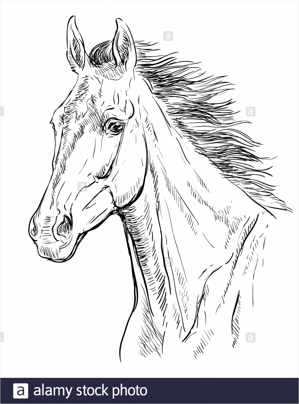 hand drawing horse portrait horse head with long mane in black color isolated on white background vector hand drawing illustration retro style port 2ADGG1N yrwoy