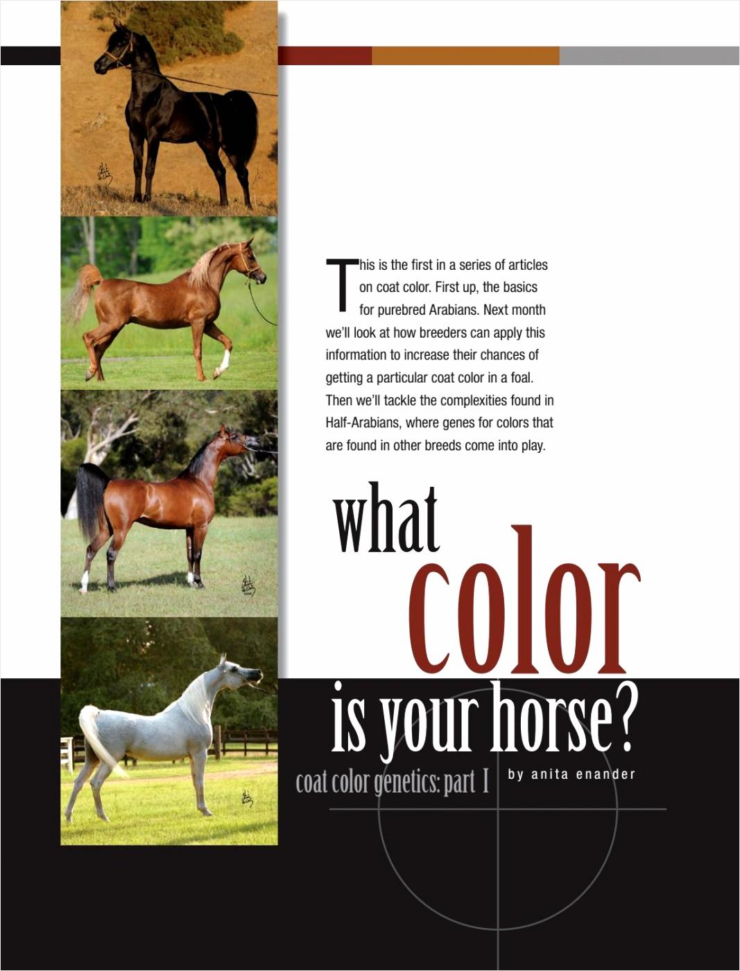 otw 0712 what color is your horse part 1 unane