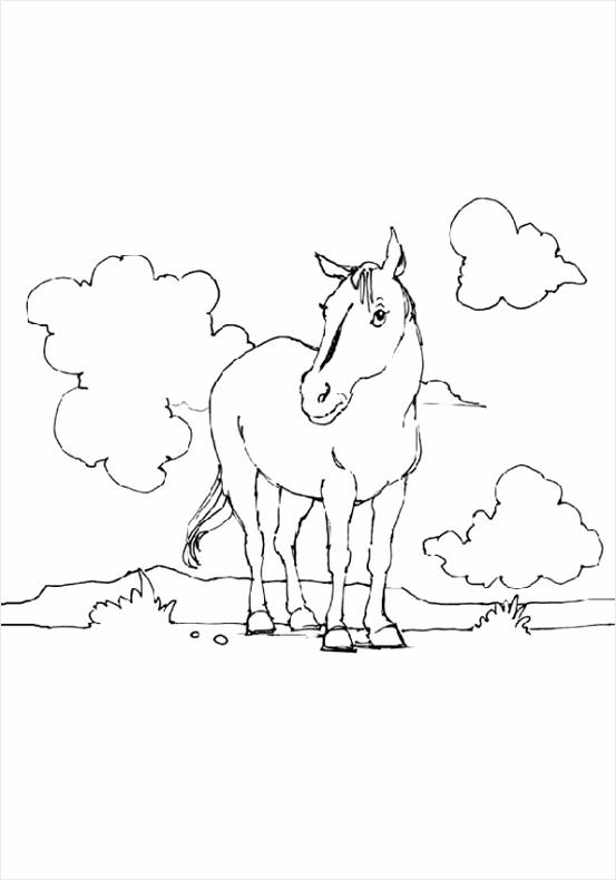 kleurplaten ren paarden m=0 trkwt