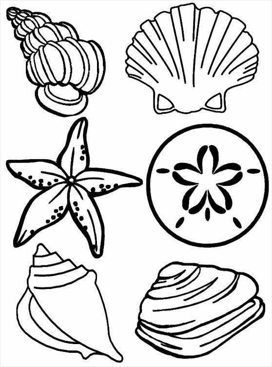 plete Sea Shells Family Free Coloring Page pusoa