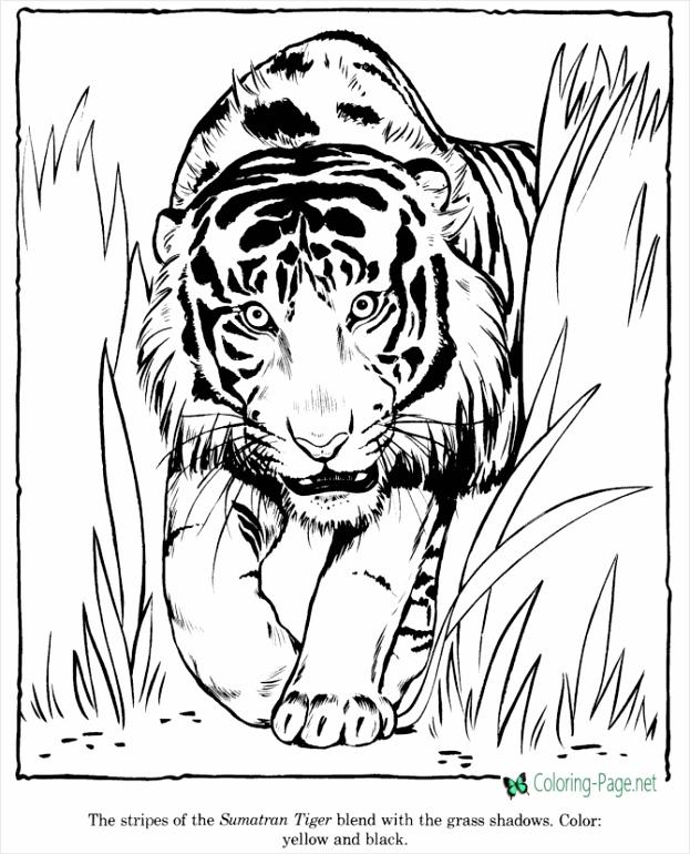 tiger uuept