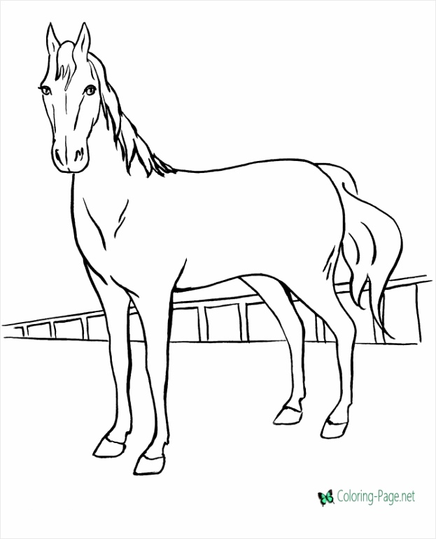 horse coloring sheets unique horse coloring pages of horse coloring sheets iotte