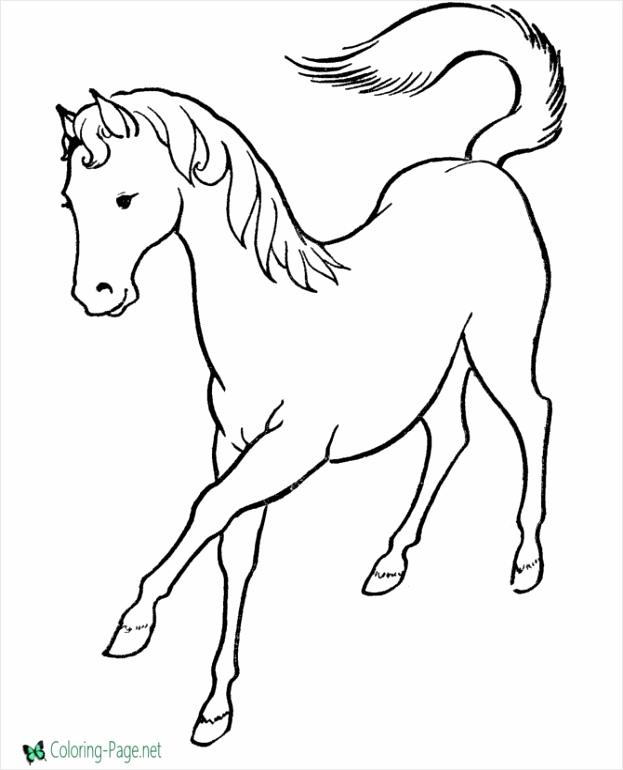 horse 013 iaket