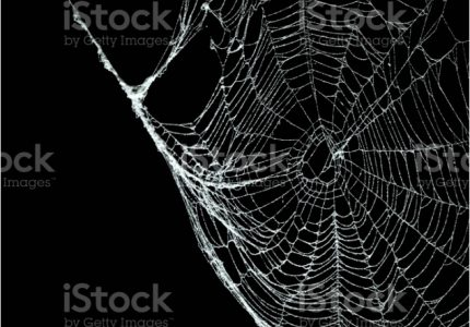 Real Frost Covered Spider Web Isolated Black Stock Spider Web Color, source:istockphoto.com
