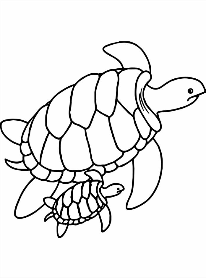 Sea Turtle coloring pages 1 trttu
