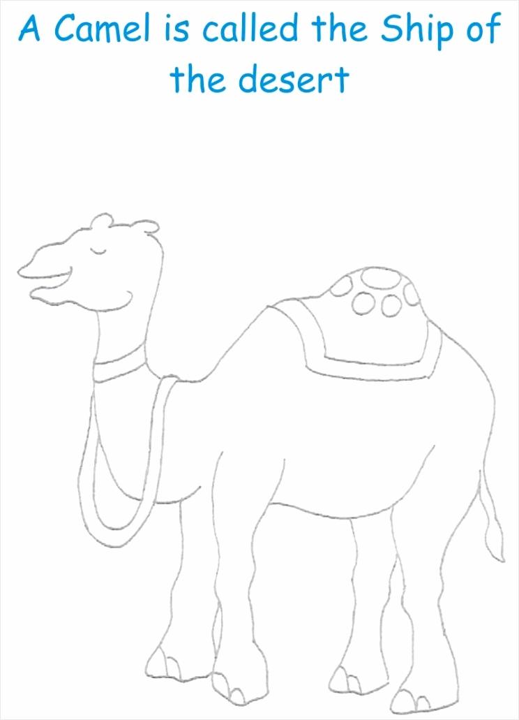 3185 Camel wioeo