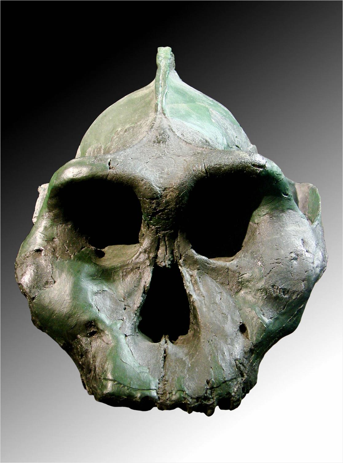 Paranthropus aethiopicus yyiae