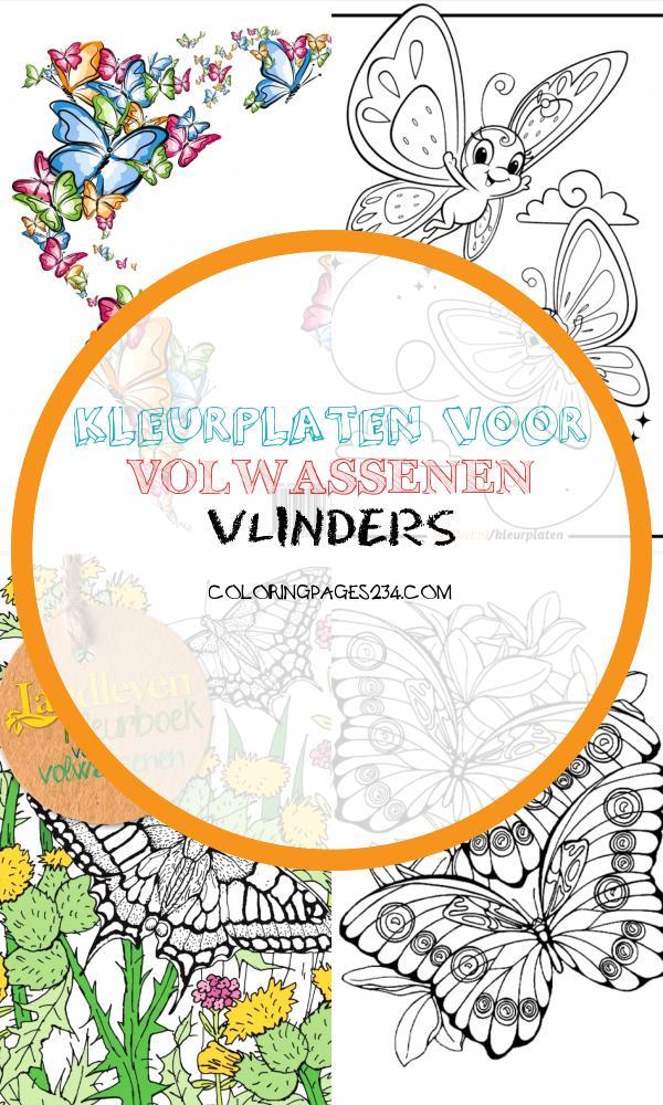 Kleurplaat Vlinder kleurplaten voor volwassenen vlinders, source:eendier.nl
