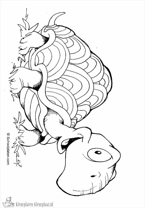 schildpad kleurplaat aedti