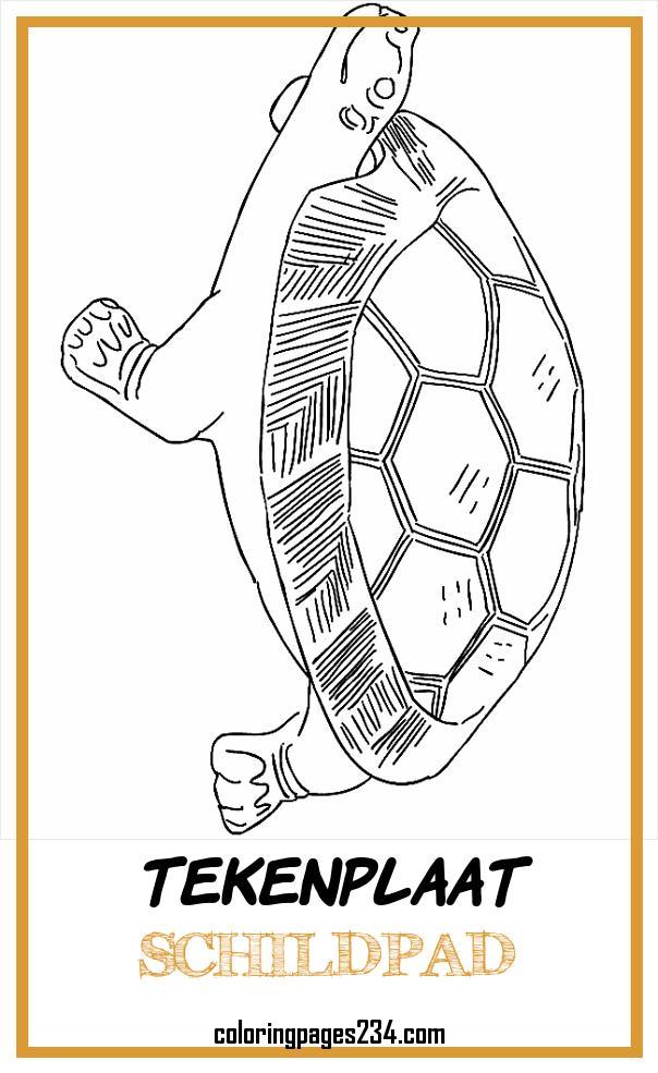 ▷ Kleurplaten Schildpadden Bewegende Afbeeldingen Gifs tekenplaat schildpad, source:animaties.com