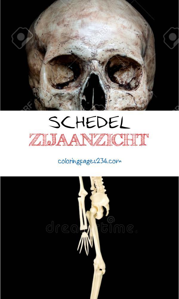 Voorkant zijaanzicht van menselijke schedel op ge¯soleerde zwarte achtergrond schedel zijaanzicht, source:nl.123rf.com