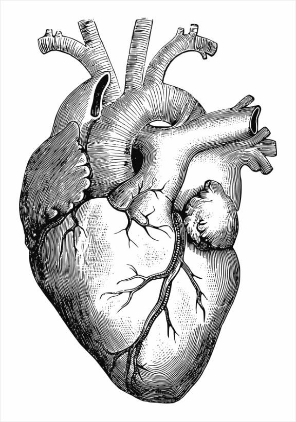 kleurplaat hart dl yerwy