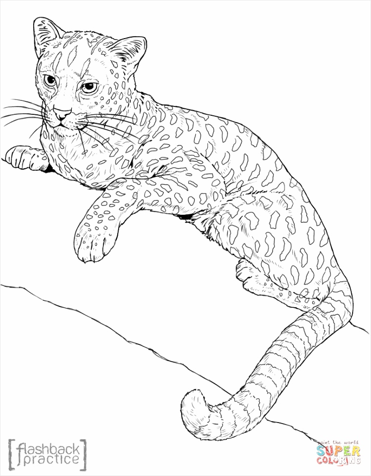 african golden cat coloring page owfht