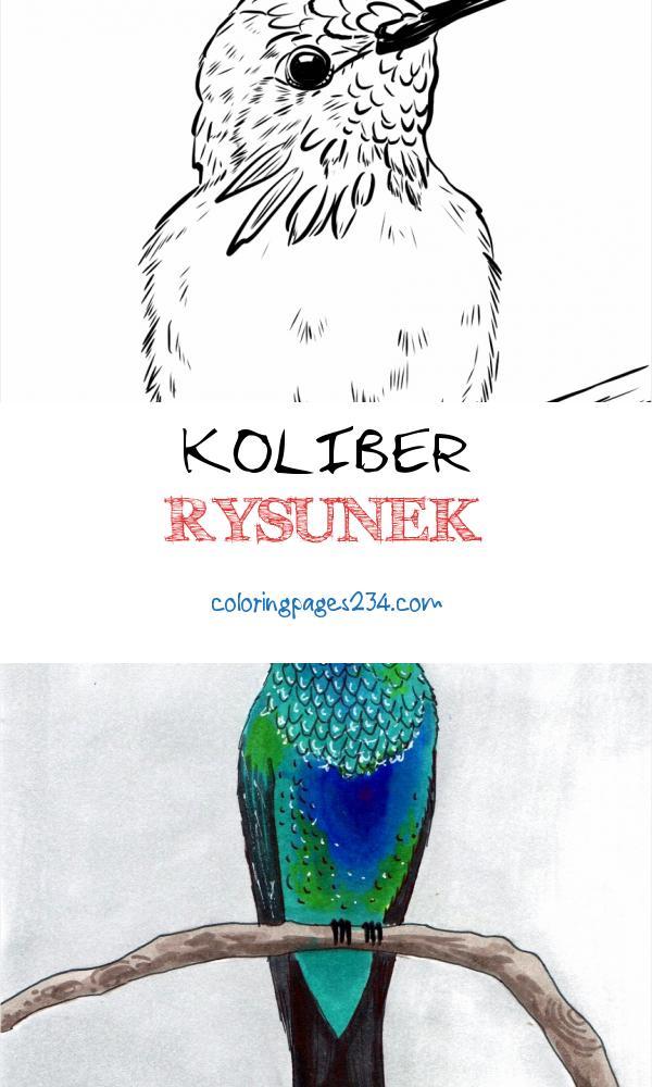 Xopjlh 65345 Hjg1ypwusaabveoxq Koliber Rysunek Kolorowanka Koliberek Liliobrody 1127862
