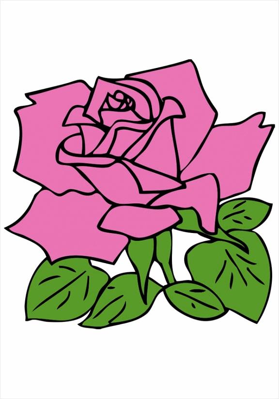 afbeelding roos dl eeryy