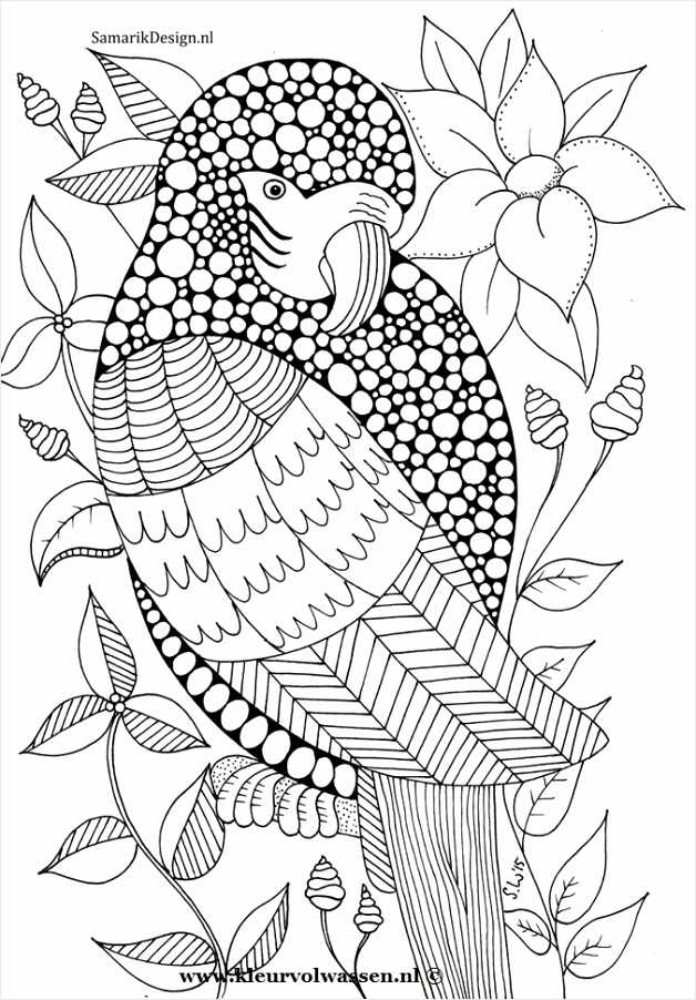 bird feathers drawing 25 oiidw