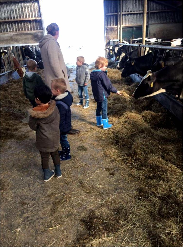 6536 bezoek aan de melkveehouderij 12b trvmu