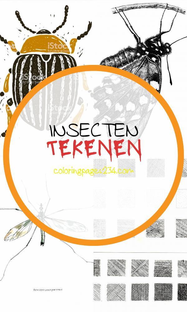 Pin van Fabienne Loyens op Insects insecten tekenen, source:pinterest.com