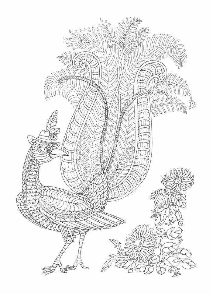 exotische vogels fantastische tropische bloemen tak gebladerte contour van de dunne gm otyui