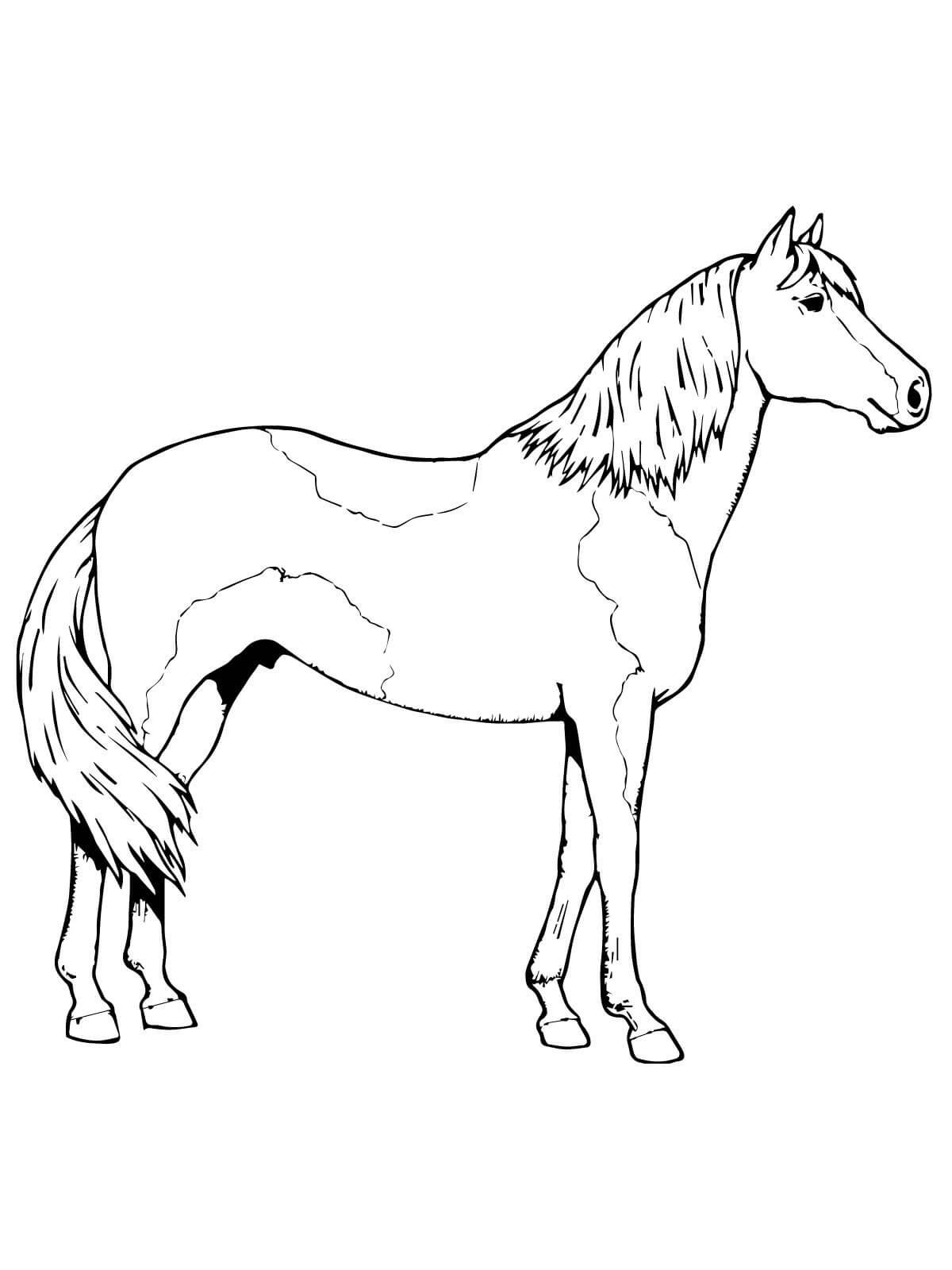 Horse Color Sheet for Kids | Activity Shelter